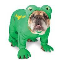 Bulldog dressed as frog