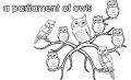 Collective noun owls